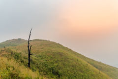 Death tree on the hill was covered by smoke forest fire at sunseะ Royalty Free Stock Photos
