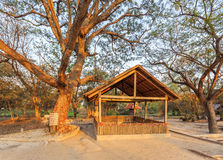 A death tree, Killing Field Choeng Ek, suburbs Phnom Penh, Cambodia. Royalty Free Stock Images