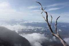 Death tree. On Kinabalu Nation Park Malaysia Stock Photography