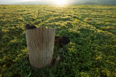Death tree in meadows Royalty Free Stock Images