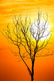 Death tree over sky background in sunset Stock Image