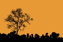 Death tree standing alone as silhouette Royalty Free Stock Photo