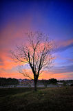 Death tree during sunset Stock Images