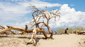 Death trees in Death Valley National Park Royalty Free Stock Photos