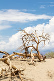 Death trees in Death Valley National Park Stock Photography