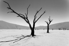 Death trees, Namibia. Image digitally altered intentionally. A view from Dead Vlei, Sossusvlei Namibia. Image digitally altered intentionally. Black and white stock photo