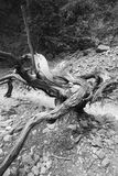 Death trunk with lines at Imbros Gorge Stock Image
