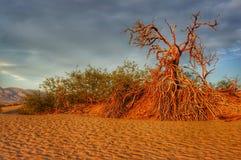 Death Valley, США Стоковая Фотография RF