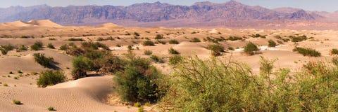 Death Valley 免版税图库摄影