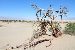 Death Valley Imagens de Stock