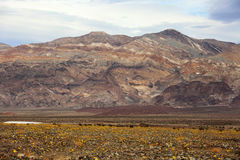 Death Valley California Mountains and Desert Wildflowers Royalty Free Stock Photos