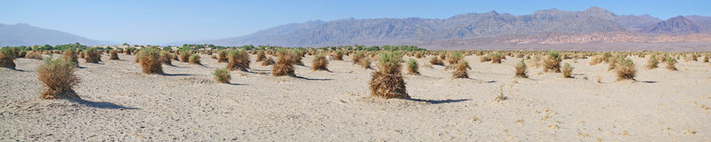 Death Valley Devils CornField - Panorama Stock Image