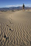 Death Valley Dunes. Hiker looking over the Death Valley Dunes in California stock images