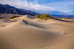 Death Valley Dunes. Rippled sand dunes and mountains in mid morning light at Stovepipe Wells, Death Valley National Park, California, USA Royalty Free Stock Images