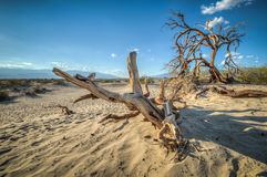 Death Valley dunes wood. Death Valley dunes california at sunset and a wood piece Stock Photo