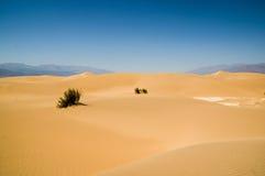 Death Valley för landskap för sanddyn nationalpark Arkivfoton