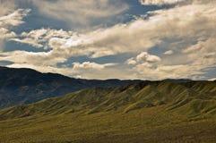 Death Valley in fioritura Immagine Stock
