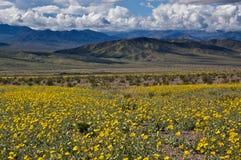 Death Valley in fioritura Fotografia Stock