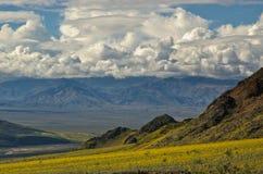 Death Valley in fioritura, passaggio di giubileo Fotografie Stock