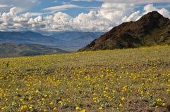 Death Valley in fioritura, passaggio di giubileo Fotografie Stock Libere da Diritti