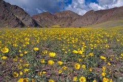 Death Valley in fioritura, passaggio di giubileo Fotografia Stock Libera da Diritti