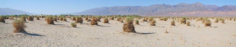 Death Valley jäkelCornField - panorama Fotografering för Bildbyråer
