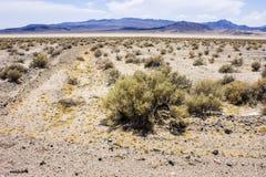Death Valley Kalifornien Royaltyfria Bilder