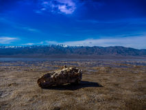 Death Valley, la Californie Photos libres de droits