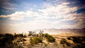 Death valley. Landscape with sand and branches Stock Photos