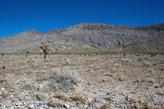 Death Valley National Park, California. Royalty Free Stock Image