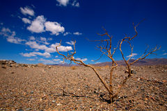 Death Valley National Park California dried branches Royalty Free Stock Photo