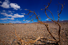 Death Valley National Park California dried branches Royalty Free Stock Images