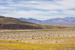 Death Valley National Park during super bloom Stock Photo