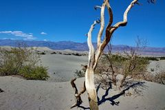 Death Valley nationalpark - Kalifornien - USA Fotografering för Bildbyråer