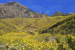 Death Valley NP Fotografia Stock Libera da Diritti