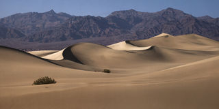 Death Valley. A panoramic view of the Mesquite Dunes at Death Valley National Park Royalty Free Stock Photo