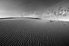 Death Valley Sand Dune. Wind swept sand creating ridges on a Death Valley sand dune in California Royalty Free Stock Images
