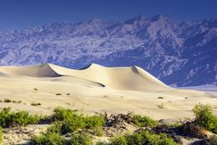 Death Valley sanddyn arkivfoton