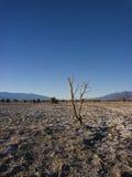 Death- Valleyebenen Stockfoto