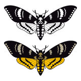 Deaths head hawk moth Stock Photos