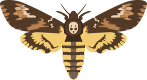 Deaths Head Moth Stock Images