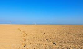 Deauville plaża w Calvados departement w Normandy regionie w Francja Deauville jest prestiżowym kurortem piękna nad ptak chmur ko Zdjęcie Stock