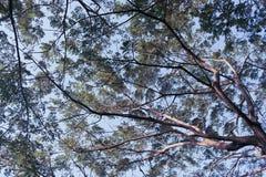 Debajo de árbol grande del verde de la naturaleza fotografía de archivo libre de regalías