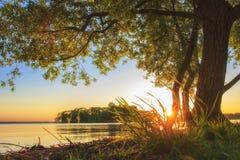 Debajo de árbol grande en orilla del lago en puesta del sol en verano Paisaje del verano de la naturaleza Árbol rameado grande en foto de archivo libre de regalías