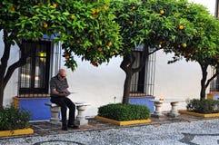 Debajo de árboles de naranja amarga foto de archivo libre de regalías