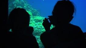 Debajo de gente del agua almacen de video