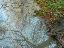 Debajo de la lluvia - reflexiones Fotos de archivo