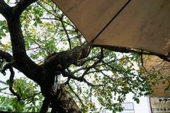 Debajo de la sombra Fotos de archivo