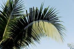 Debajo de las hojas del coco con el cielo Fotos de archivo libres de regalías