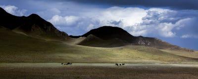 Debajo de las nubes son los prados y los caballos fotos de archivo